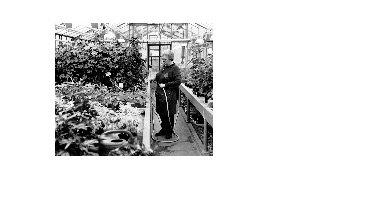 Gartenbau, Friedhöfe und Forsten